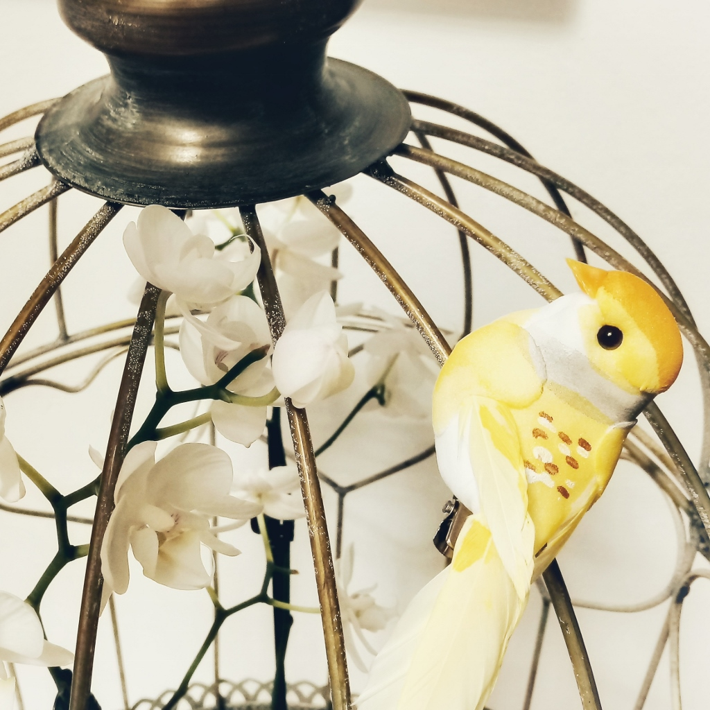gallery-canary